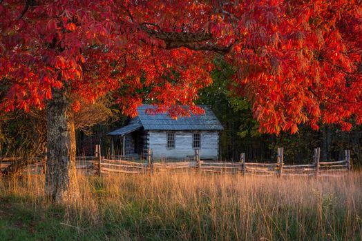Photo free autumn, tree, house