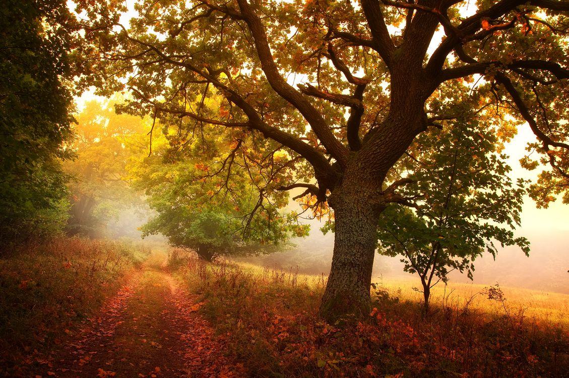Осенний туман · бесплатная заставка