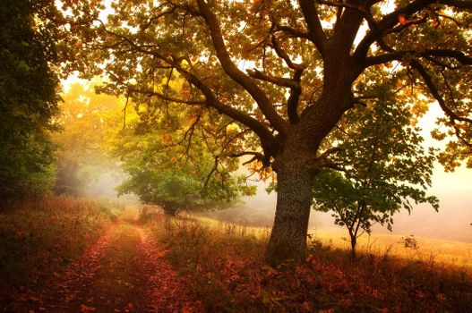 Осенний туман · бесплатное фото
