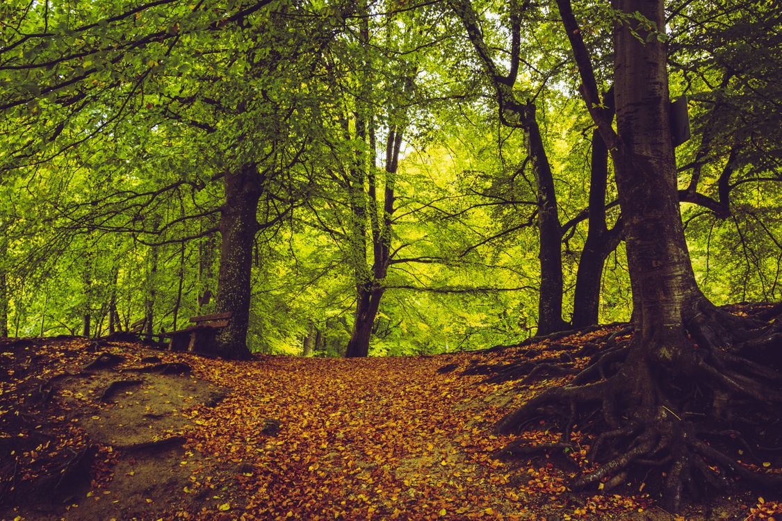 Осень в лесном парке · бесплатная заставка