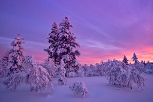 Заставки закат солнца, зима, деревья