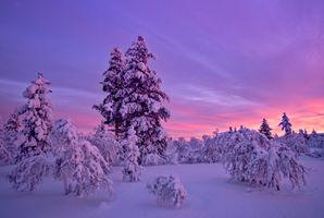 Фото бесплатно закат солнца, зима, деревья