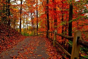 Photo free autumn, colorful, forest