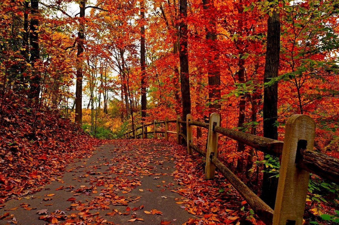 Обои осень, красочный, лес картинки на телефон
