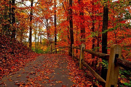 Фото бесплатно осень, красочный, лес