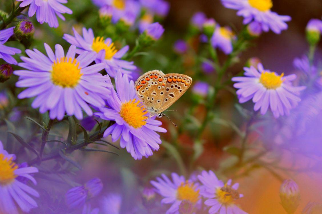 Цветы фиолетового цвета · бесплатное фото