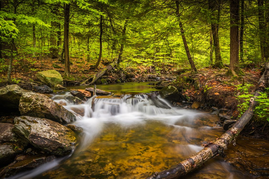 Park Ricketts Glen · free photo