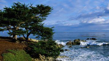 Photo free beach, tree, slope