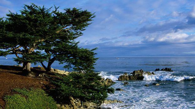 Фото бесплатно берег моря, дерево, склон