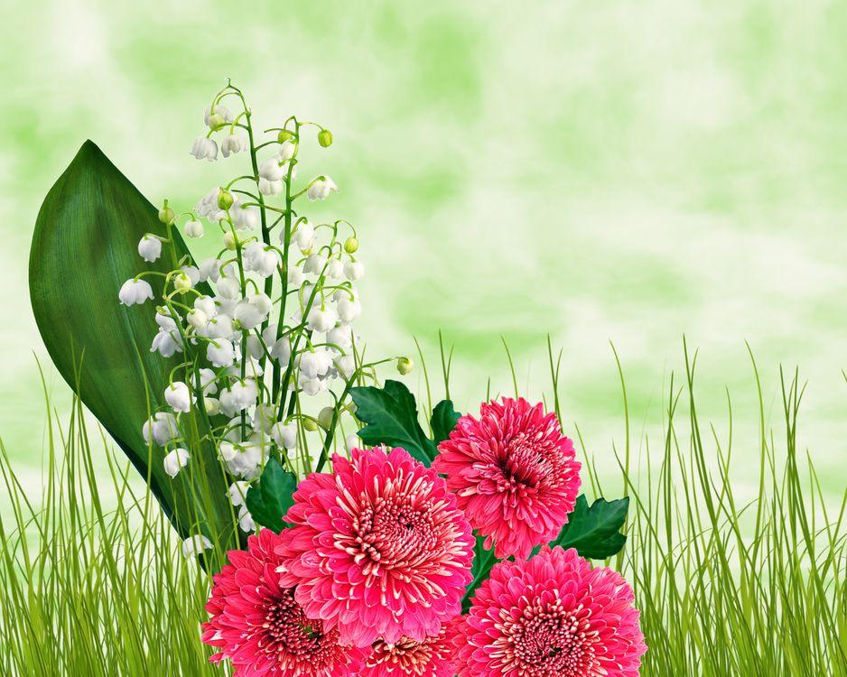 Фото бесплатно ландыши, георгины, трава, цветочная композиция, флора, цветы