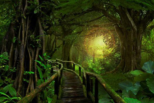 Photo free Trees, green, bridge