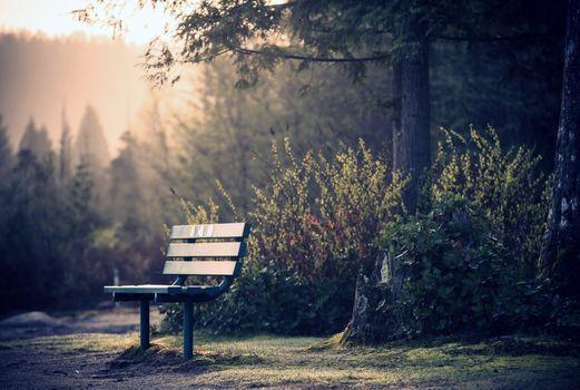 Фото бесплатно стулья, земля, сады