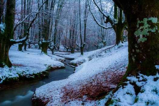 Photo free river, forest, Basque country