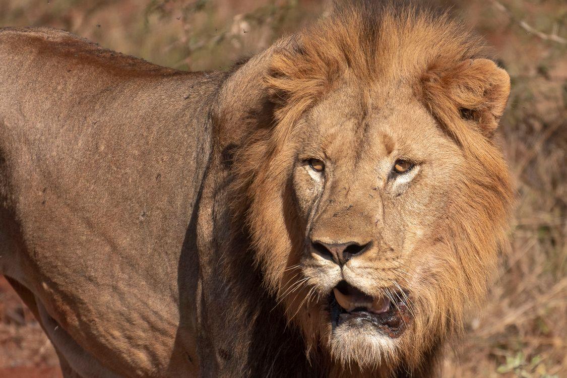 Обои хищник, взгляд, Африка картинки на телефон