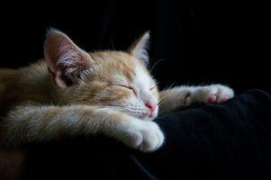 Бесплатные фото кот,кошка,животное,сон,чёрный фон