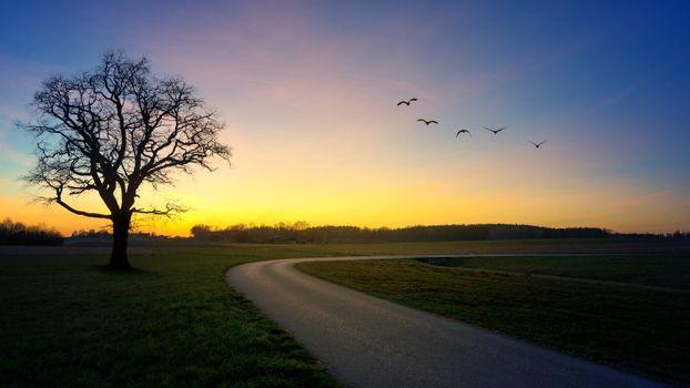 Фото бесплатно простор, поле, птицы