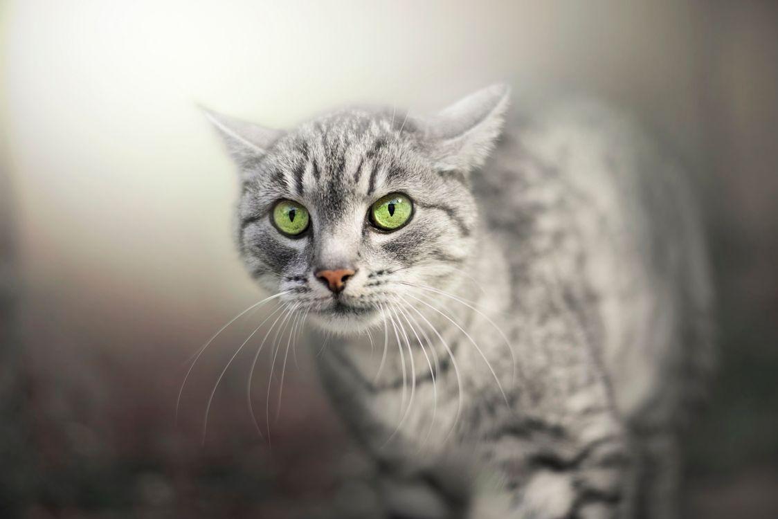 Кот просто супер · бесплатное фото