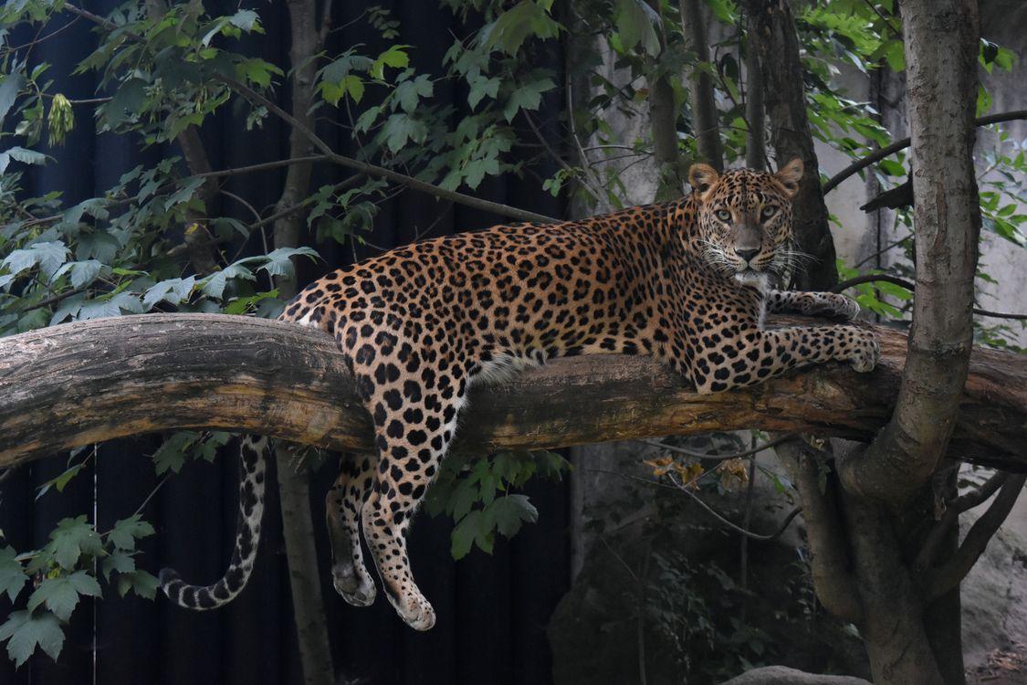 леопард на дереве · бесплатное фото