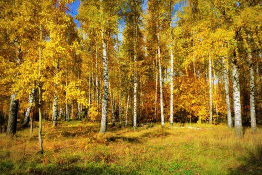 Заставки осень,березы,листья березы,листопад,лес,деревья,парк,осенние краски,краски осени,осенние листья,осенний лес,пейзаж