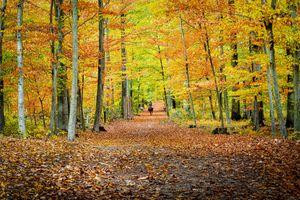 Заставки цвета осени, дорога, парк