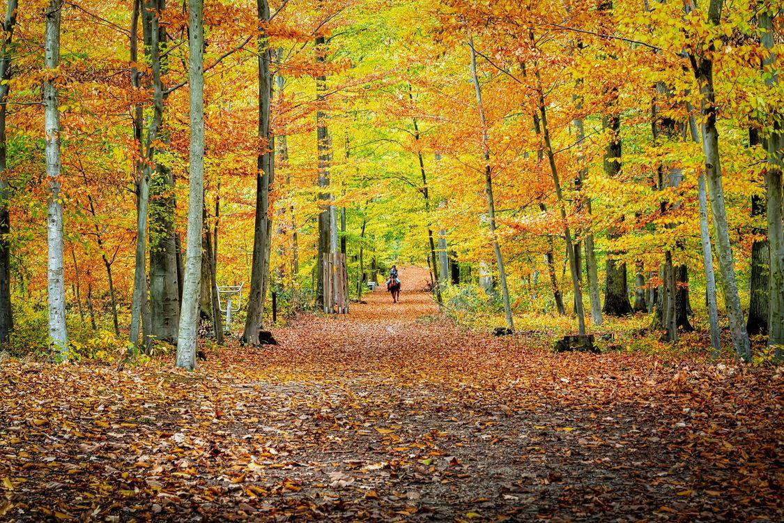 Фото бесплатно цвета осени, дорога, парк - на рабочий стол