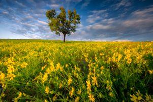 Заставки дерево, цветы, цветение