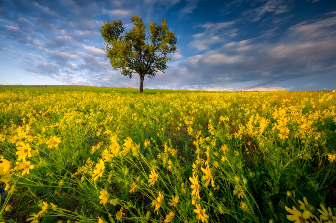 Обои поле, цветы, дерево картинки на телефон
