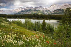 Фото бесплатно Wildflowers at Peter Lougheed Provincial Park, Kananaskis, AB