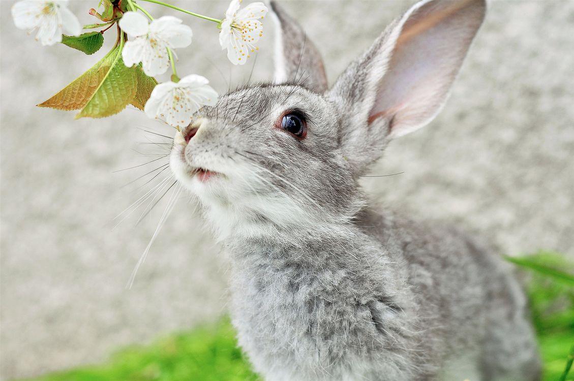 Фото бесплатно цветы, кролик, Пасха - на рабочий стол