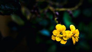 Бесплатные фото цветок,цветы,природа,растения,рыжих,флора,дикий цветок