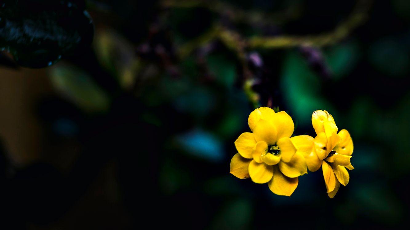 Фото бесплатно цветок, цветы, природа, растения, рыжих, флора, дикий цветок, растение, крупным планом, макросъемка, весна, лепесток, лучик солнечный, стебель растения, обои для рабочего стола компьютера, цветы