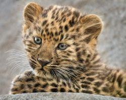 Маленький леопард · бесплатное фото