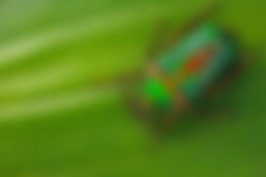 Бесплатные фото Белый точечный майский жук,обнаружен в лесу Кпалиме,Западная Африка