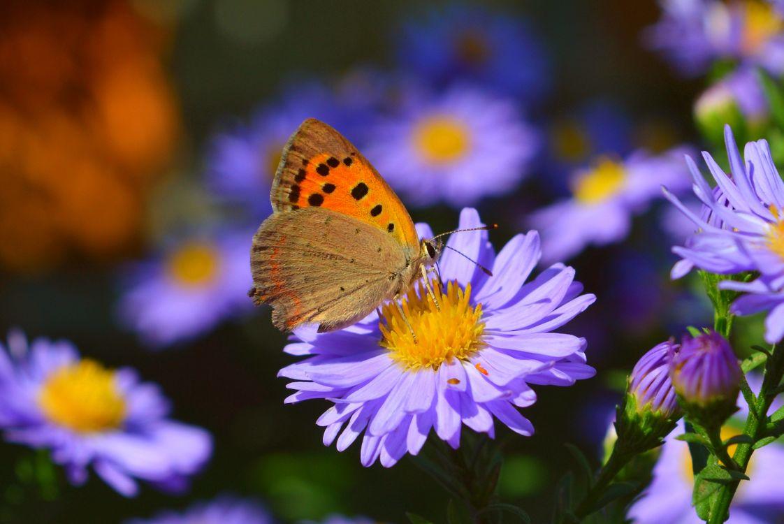 Обои цветок, бабочка, цветы, бабочка на цветке, флора, макро, природа картинки на телефон
