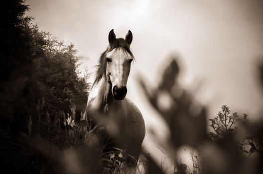 Photo free horse, monochrome, black and white
