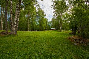 Фото бесплатно луг, поляна, лес, домик, деревья, природа, пейзаж