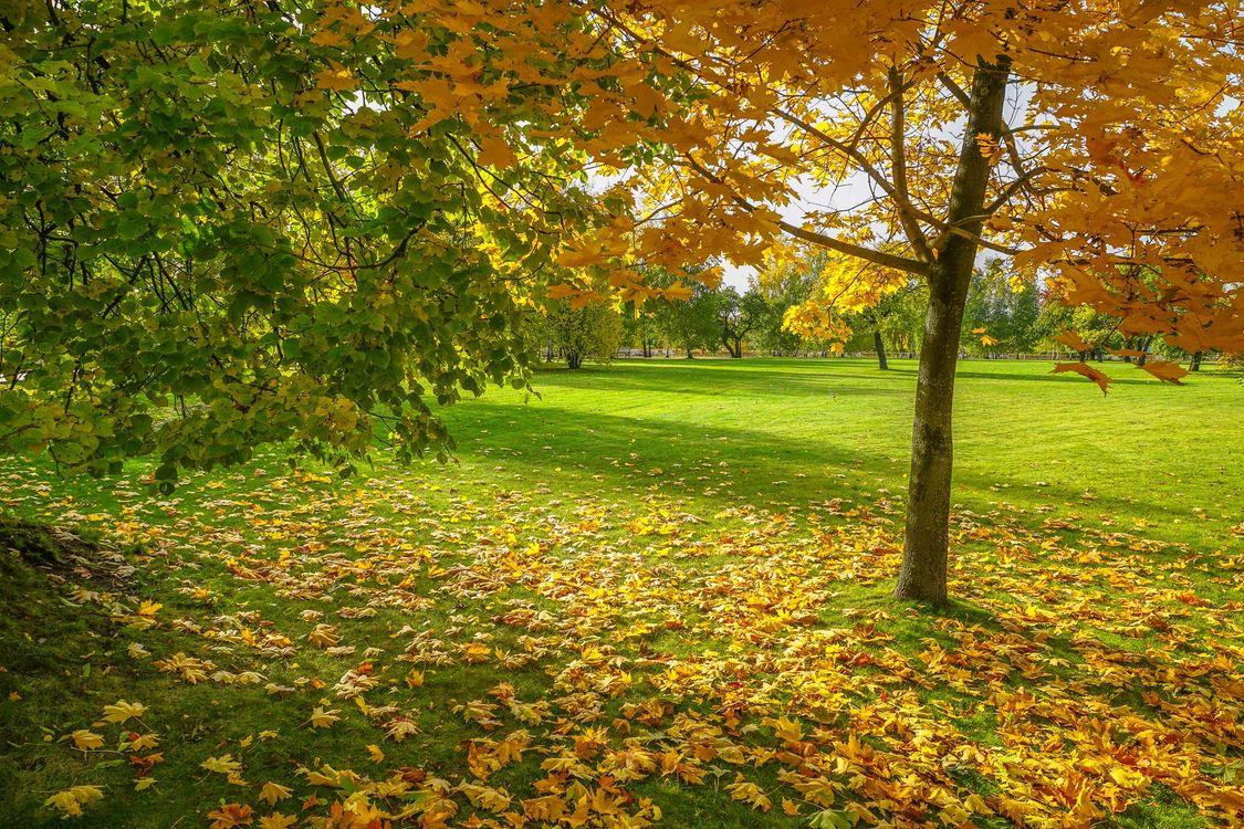 Фото бесплатно осенние листья, усадебные, Россия - на рабочий стол