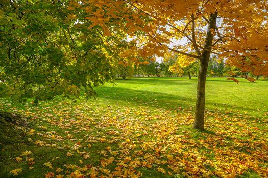 Фото бесплатно осенние листья, усадебные, Россия