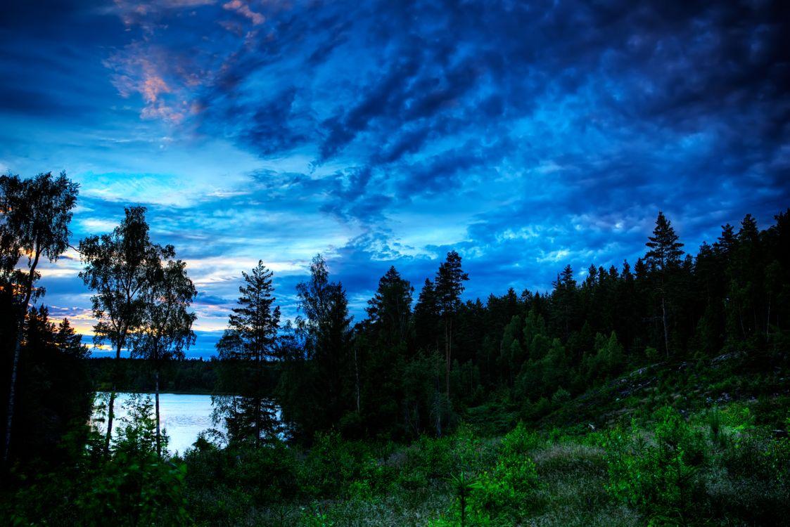 Обои озеро, деревья, силуэты, закат, сумерки, пейзаж картинки на телефон
