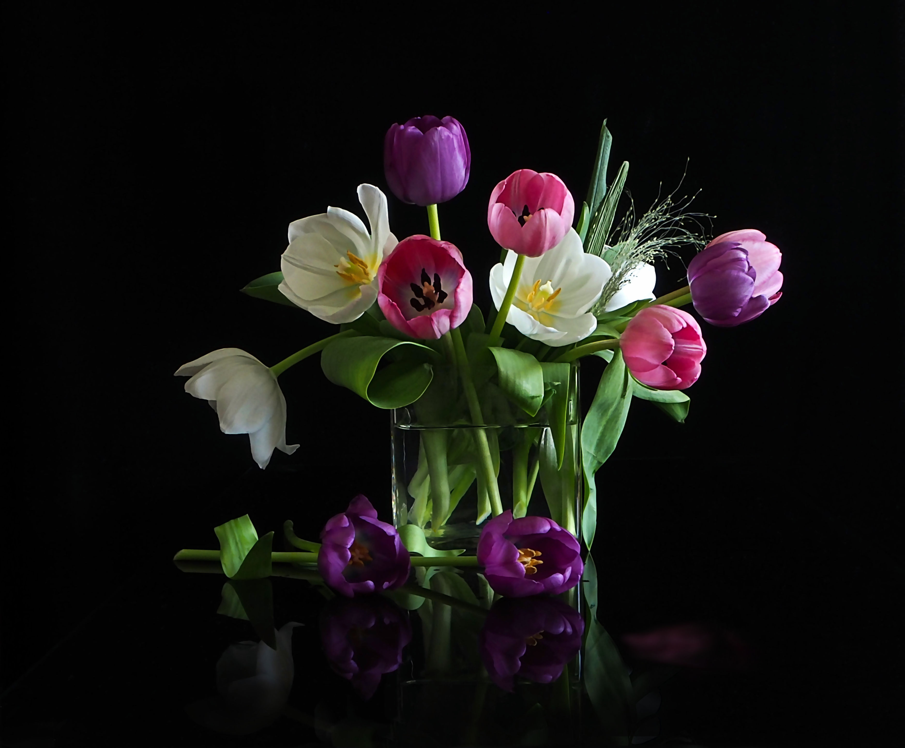 фото цветов на черном фоне высокого качества практически всех крупных