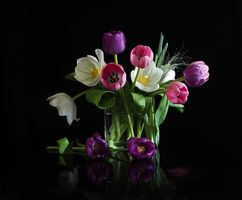 Бесплатные фото ваза,тюльпаны,цветы,букет,флора,чёрный фон