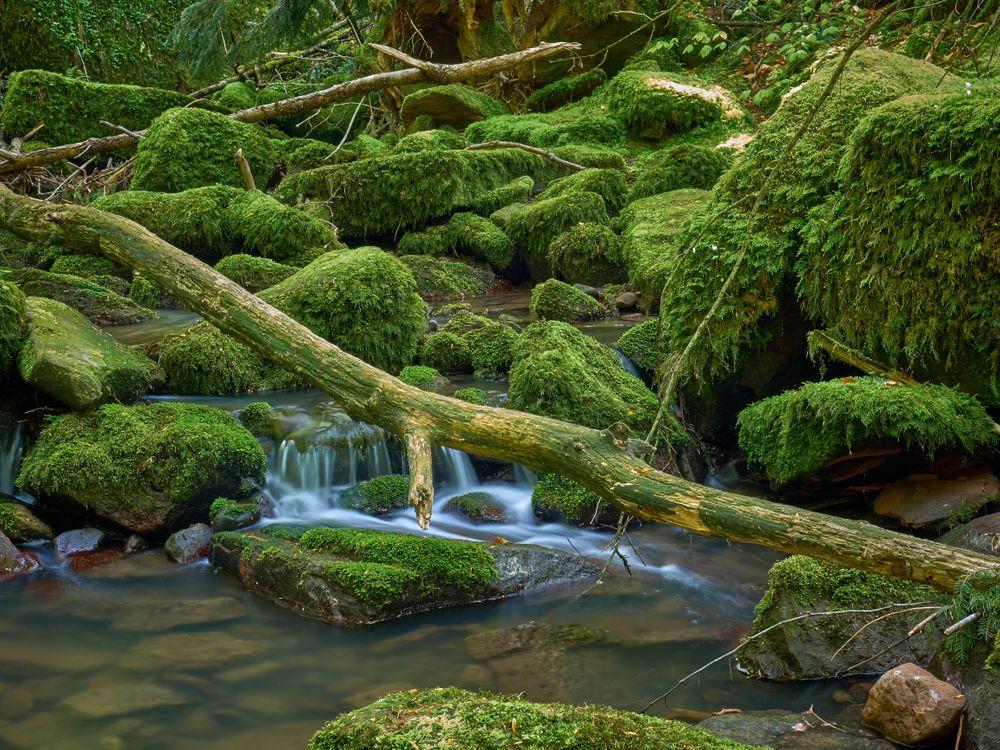 Фото бесплатно водопад, камни, мох, речка, ручей, природа, течение, пейзаж, природа