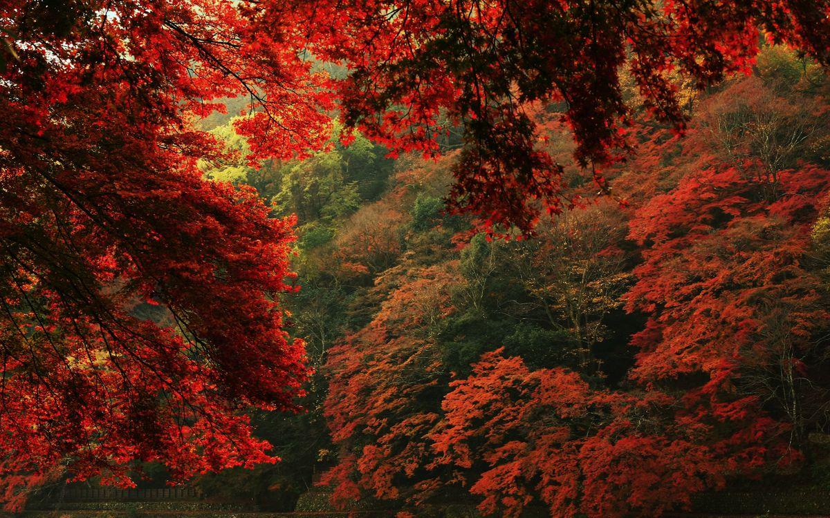 Обои осенний пейзаж, разноцветные листья, природа картинки на телефон
