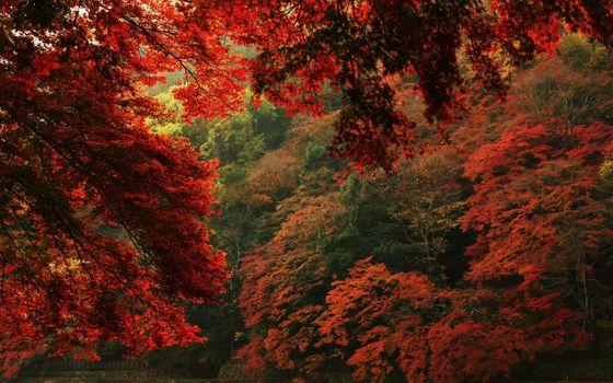 Заставки осенний пейзаж, разноцветные листья, природа