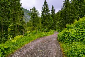 Заставки Бад-Гаштайн,Австрия,Bad Gastein,лес,дорога,деревья,природа