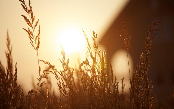Photo free beautiful, bokeh, field
