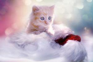 Фото бесплатно котёнок, кошка, кот, домашнее животное, морда, взгляд, фото