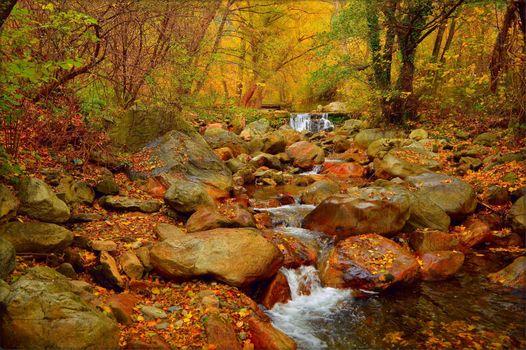 Заставки осенние листья, пейзаж, осенние деревья