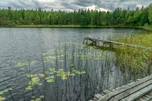 Бесплатные фото озеро,лес,деревья,мостик,причал,волны,природа,пейзаж
