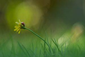 Photo free flower, ladybug, grass